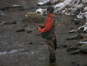 Maggie Valley Fishing Cozy Creek Fly Fishing